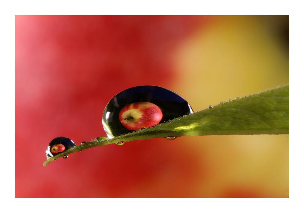 "photo ""Vitamin drops II"" tags: nature, flowers"