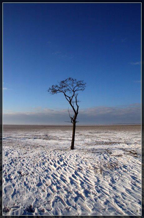 """фото """"Одиночество..."""" метки: пейзаж, зима"""