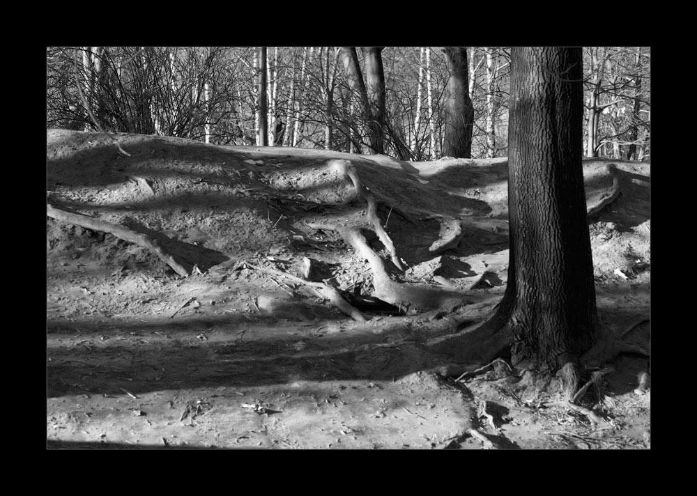 """фото """"Песок со льдом вперемежку - Это не зима, а просто насмешка..."""" метки: пейзаж, черно-белые, зима"""