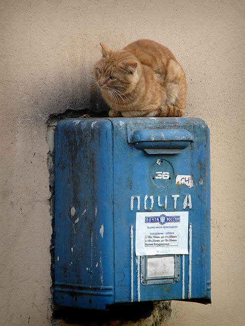 """фото """"Старый почтовый служака"""" метки: природа, домашние животные"""