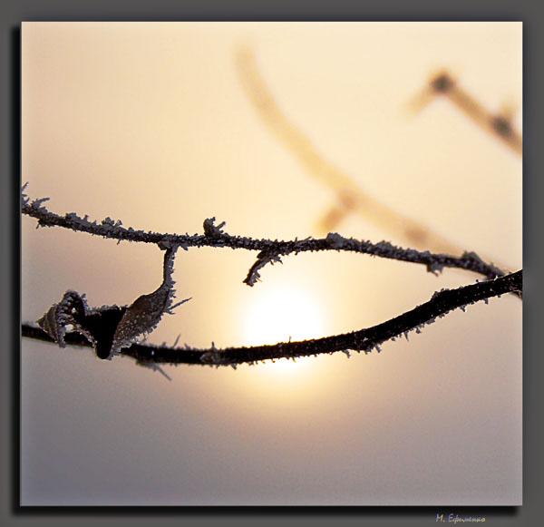 "фото ""зимняя дымка"" метки: природа,"