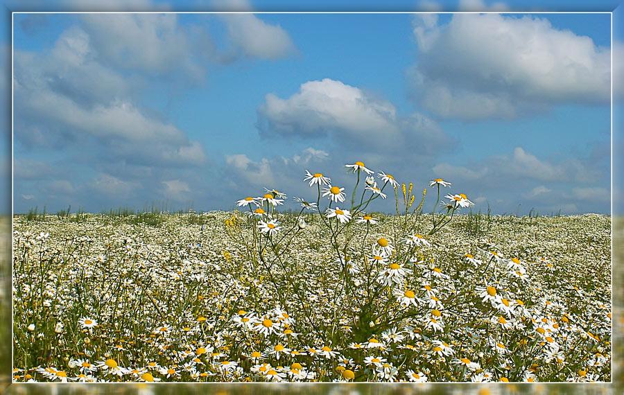 """фото """"Упавшие облака"""" метки: пейзаж, природа, лето, цветы"""