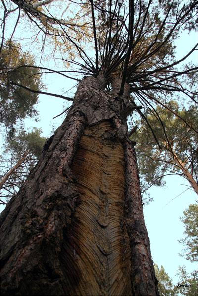 """фото """"Несмотря ни на, что..."""" метки: пейзаж, лес"""
