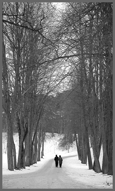 "photo ""The trees are always great .."" tags: landscape, black&white, winter"