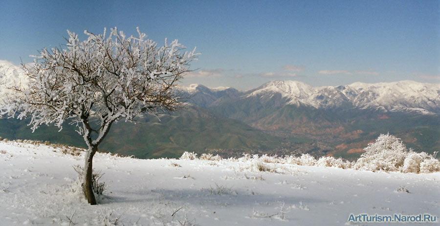 """фото """"Одинокое дерево"""" метки: пейзаж, горы"""