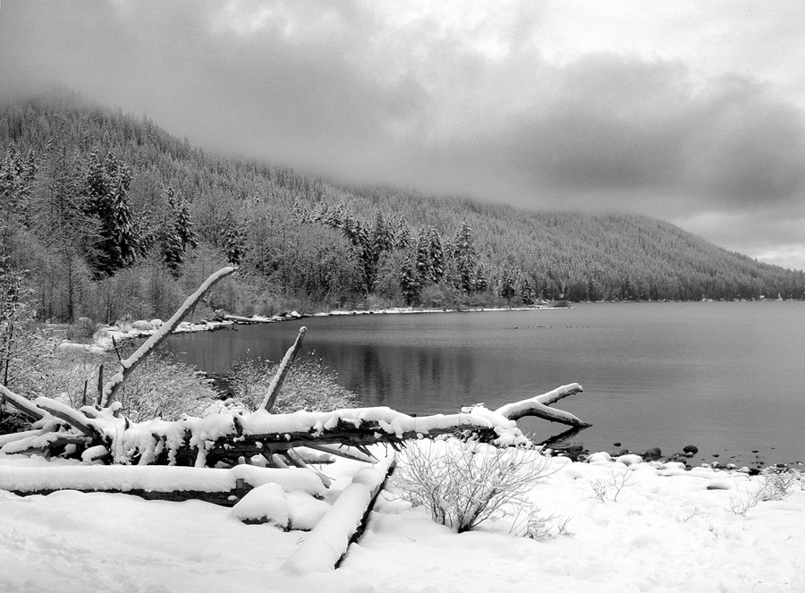 "photo ""Snow and Fog"" tags: landscape, black&white, winter"
