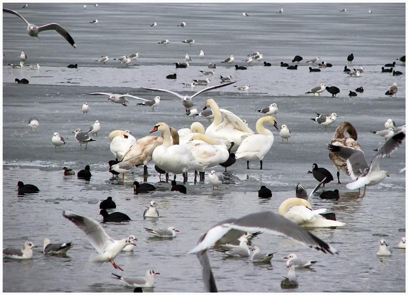 "фото ""Птичий базар"" метки: пейзаж, природа, зима"