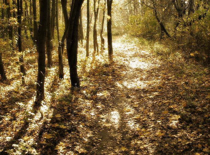 """фото """"осенняя"""" метки: пейзаж, лес, осень"""