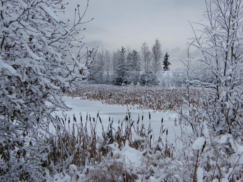 """фото """"Зимняя сцена"""" метки: пейзаж, путешествия, Северная Америка, зима"""