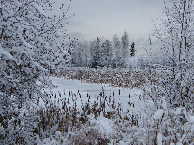 "photo ""Зимняя сцена"" tags: landscape, travel, North America, winter"