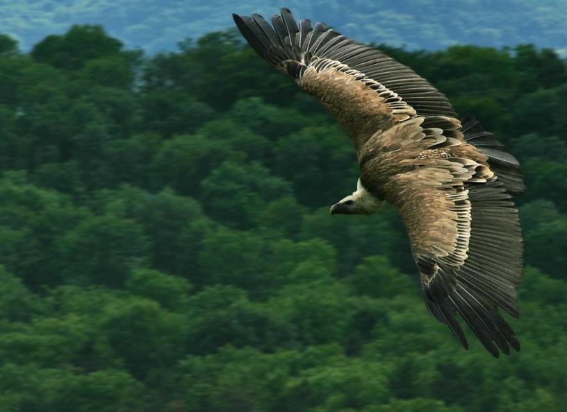 """фото """"Воздушный пират"""" метки: природа, дикие животные"""