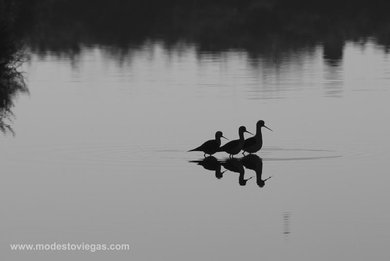 "фото ""take a walk"" метки: природа, пейзаж, вода, дикие животные"