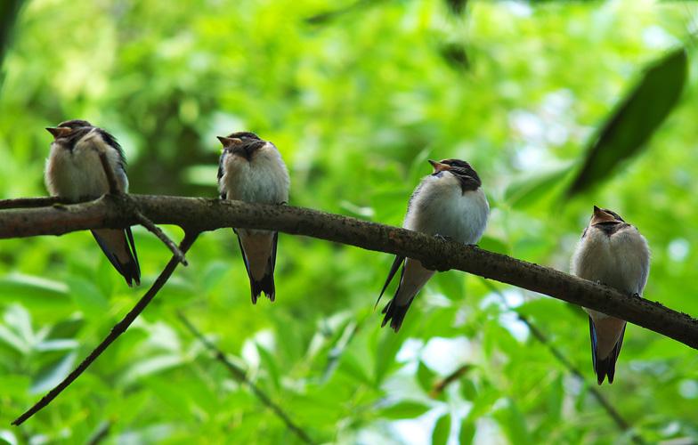 """photo """"посмотрите направо:)"""" tags: nature, wild animals"""