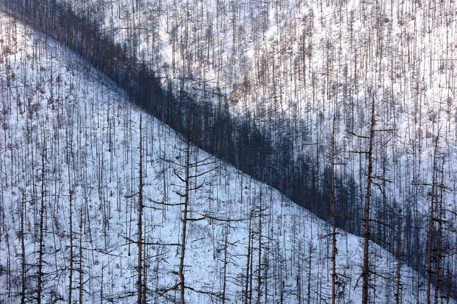 """фото """"линия жизни"""" метки: пейзаж, лес"""