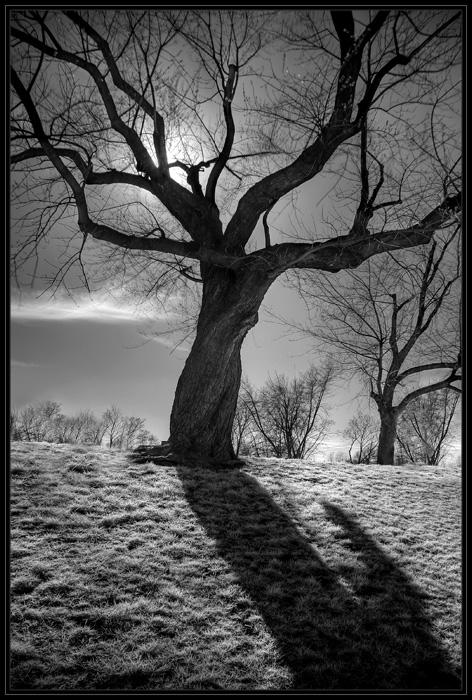 """фото """"***"""" метки: пейзаж, лес"""