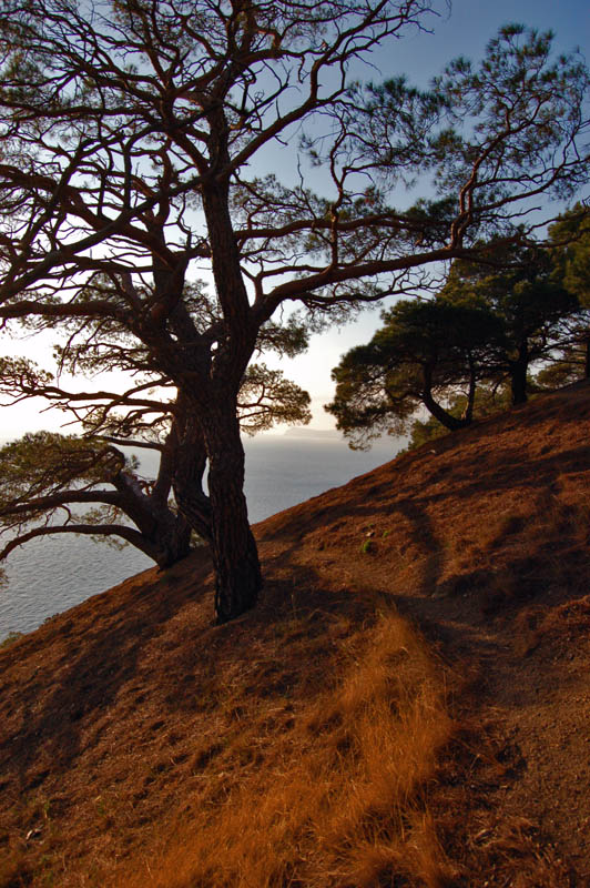 "фото ""Вечерние прогулки"" метки: пейзаж, осень"
