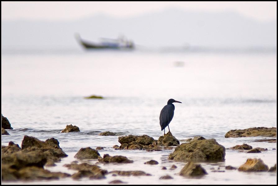 "фото ""Птица и кораблик"" метки: путешествия, жанр, Азия"