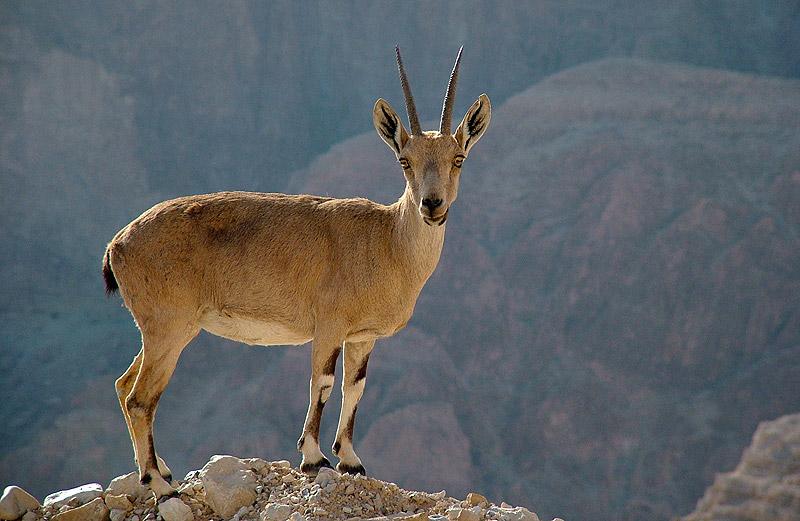 """фото """"Look at Me"""" метки: природа, дикие животные"""