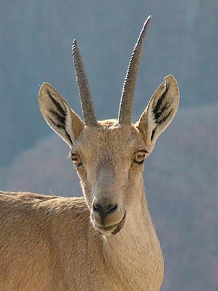 """фото """"Look at Me #2"""" метки: природа, дикие животные"""