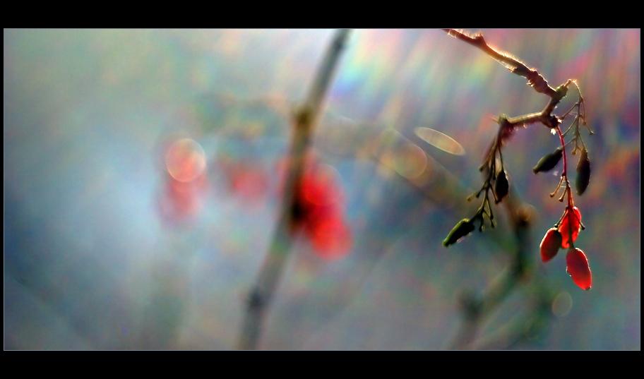 """фото """"* Berberis Vulgaris *"""" метки: природа, цветы"""