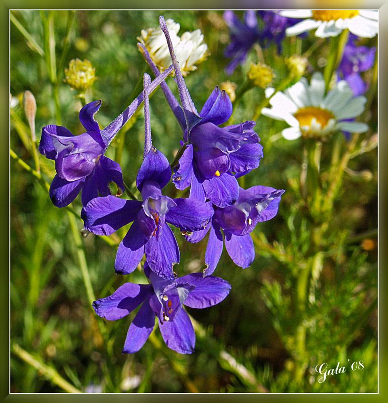 """фото """"На краю ромашкового поля"""" метки: природа, макро и крупный план, цветы"""