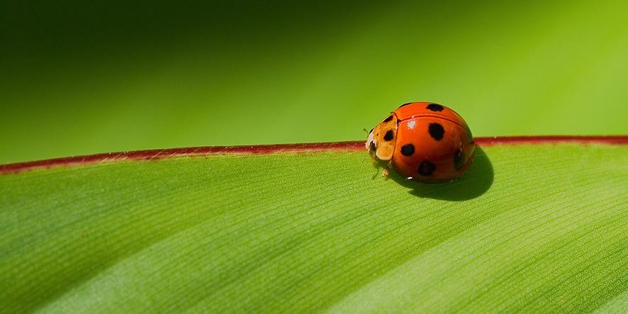 """фото """"Красной нитью..."""" метки: природа, макро и крупный план, насекомое"""