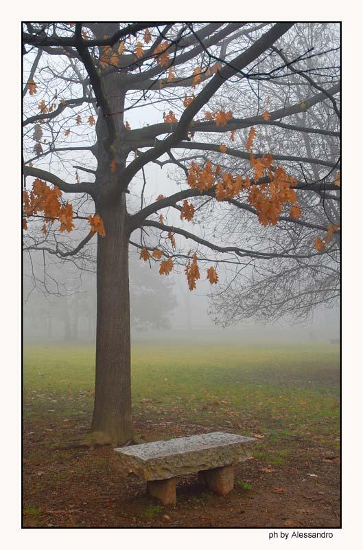 """фото """"colori"""" метки: пейзаж,"""