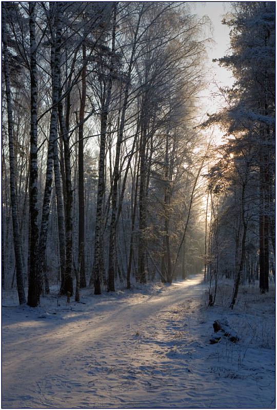 "photo ""Solar track"" tags: landscape, forest, winter"