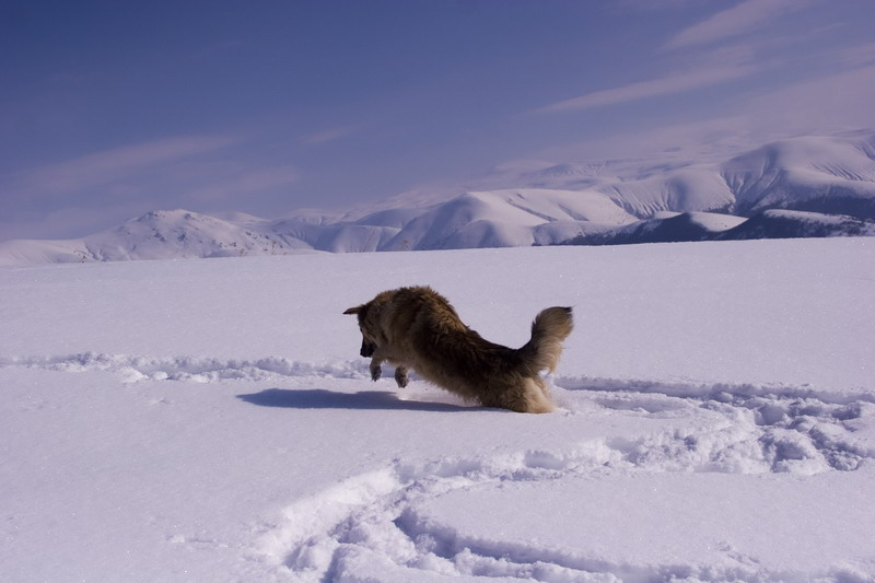 "фото ""Chasing a field mouse"" метки: пейзаж, жанр, зима"