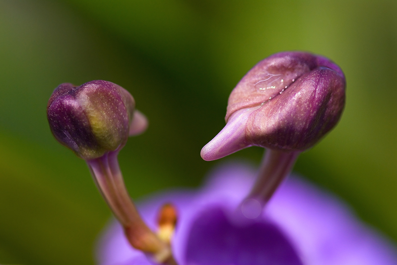 "photo ""Tet-a-tete"" tags: nature, macro and close-up, flowers"