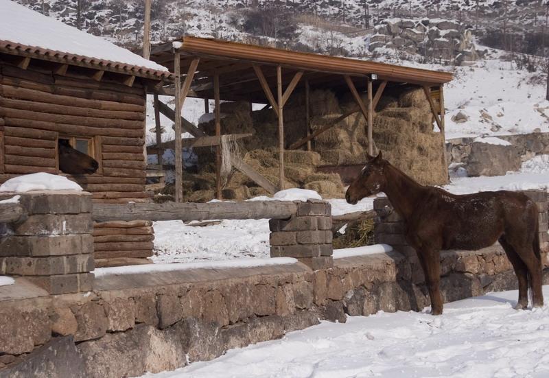 "photo ""Neighbors"" tags: nature, genre, pets/farm animals"