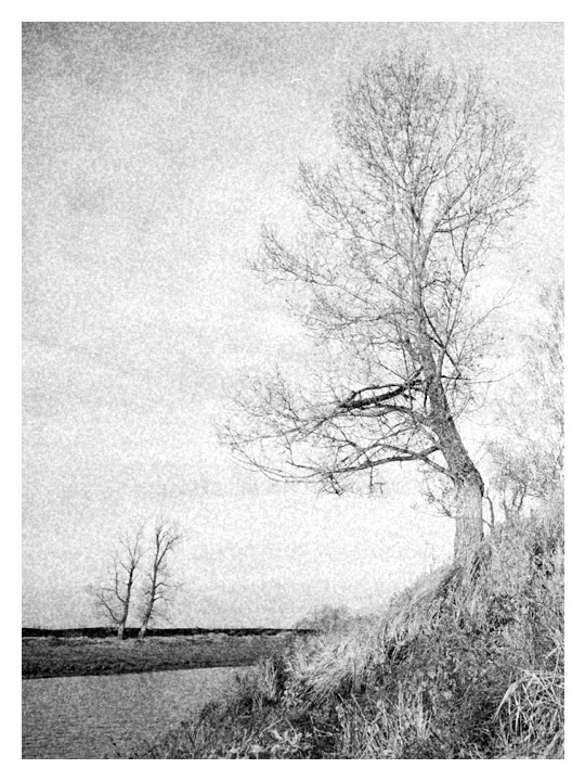 """photo """"Black & white landscape with a tree in the sky"""" tags: landscape, black&white,"""