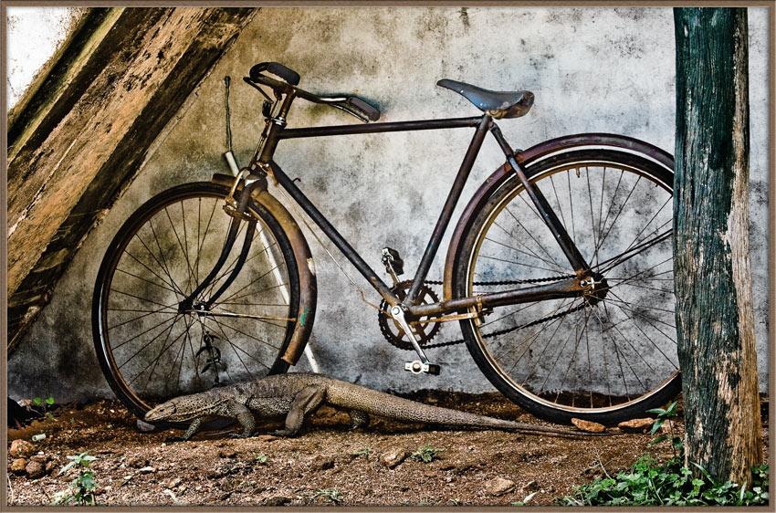 """фото """"Из жизни велосипедов"""" метки: путешествия, природа, Азия, дикие животные"""