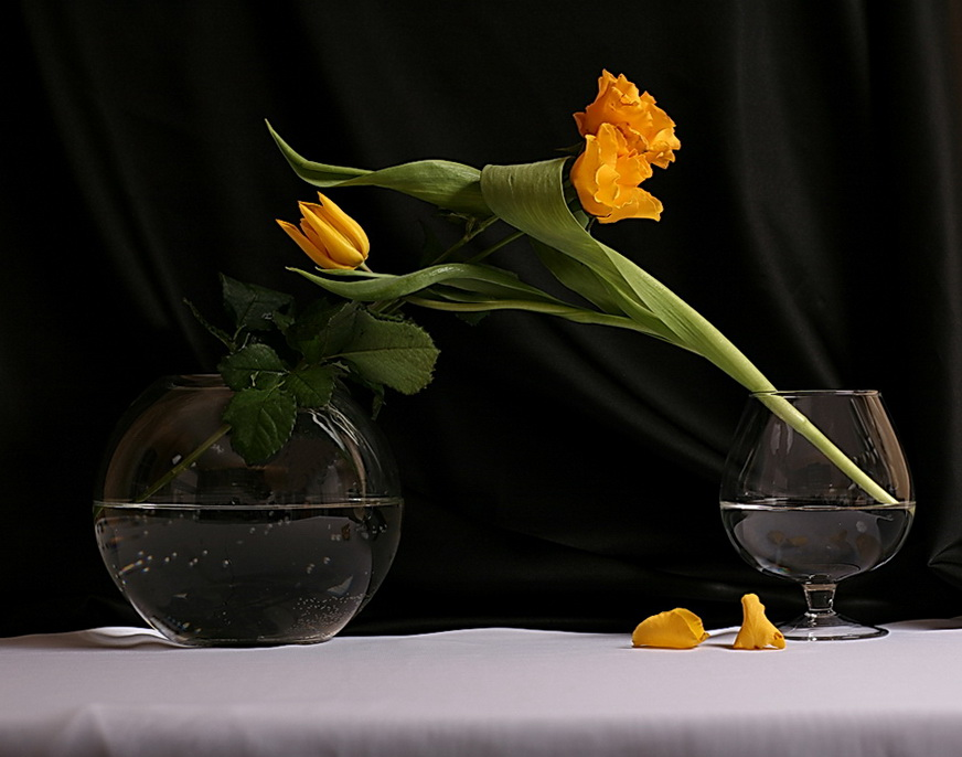 "photo ""Dialogue on Flowers Language No.8"" tags: still life,"