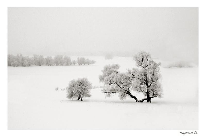 "photo ""****"" tags: landscape, black&white, winter"