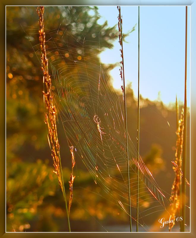 """фото """"Ловец радуги"""" метки: природа, макро и крупный план, насекомое"""