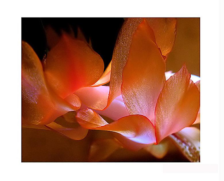 """фото """"Золотой цветок"""" метки: макро и крупный план, природа, цветы"""