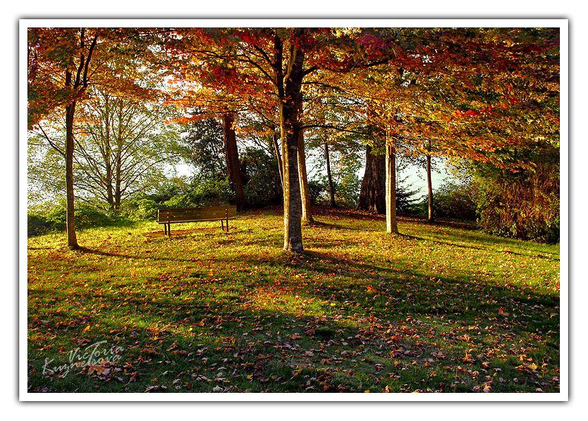"фото ""-**-**-"" метки: пейзаж, закат, лес"