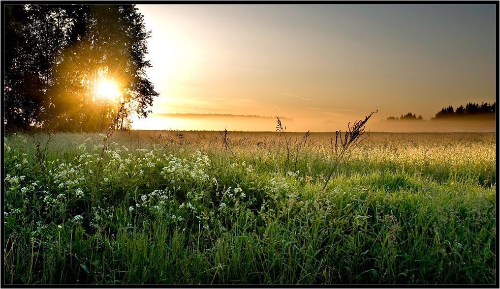"""фото """"Утренний луг"""" метки: пейзаж, закат"""