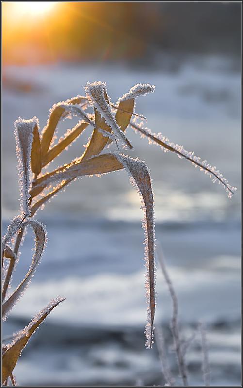 """фото """"Холодные украшения"""" метки: пейзаж, разное, зима"""
