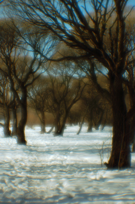 "photo ""#0074"" tags: landscape, winter"