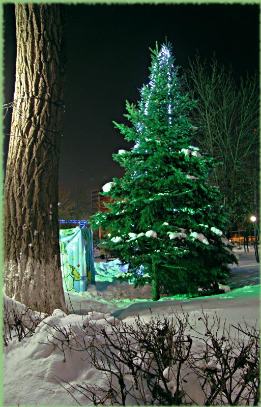 "фото ""Ёлкины праздники."" метки: пейзаж, зима"