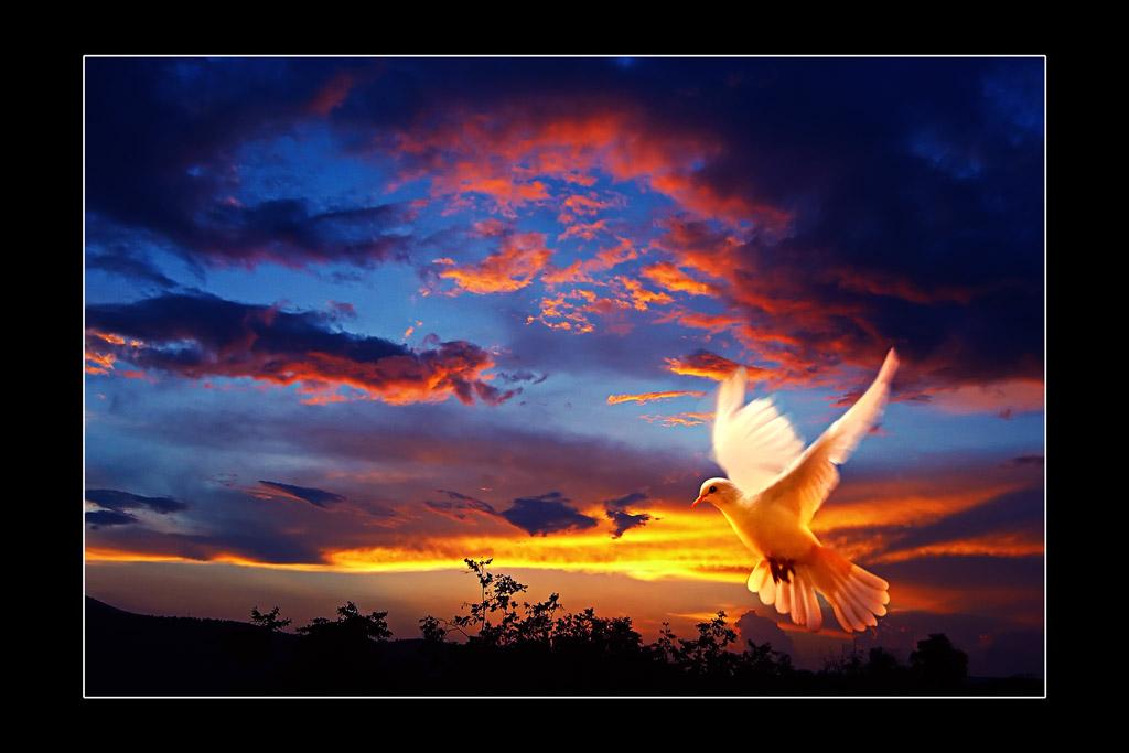 """фото """"На взлет..."""" метки: пейзаж, природа, закат"""