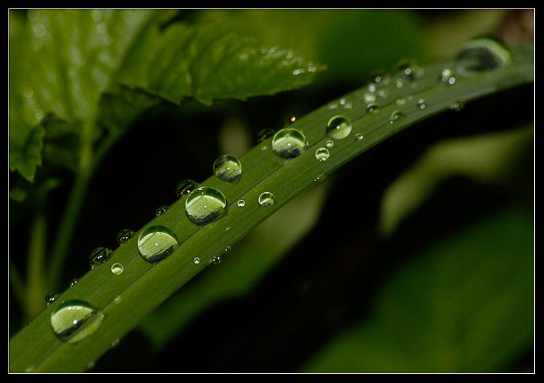 """фото """"Водяная дорога (Садовое кольцо)"""" метки: природа, цветы"""