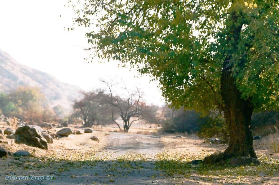"""фото """"Светлый путь"""" метки: пейзаж,"""