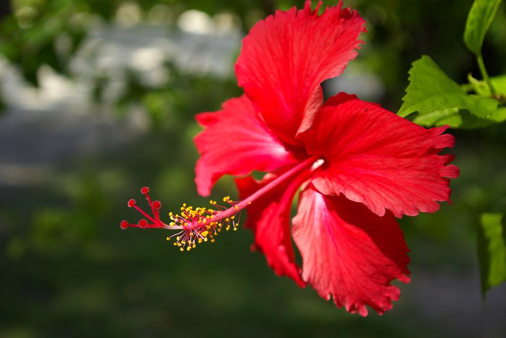 """фото """"just flower"""" метки: природа, макро и крупный план, цветы"""