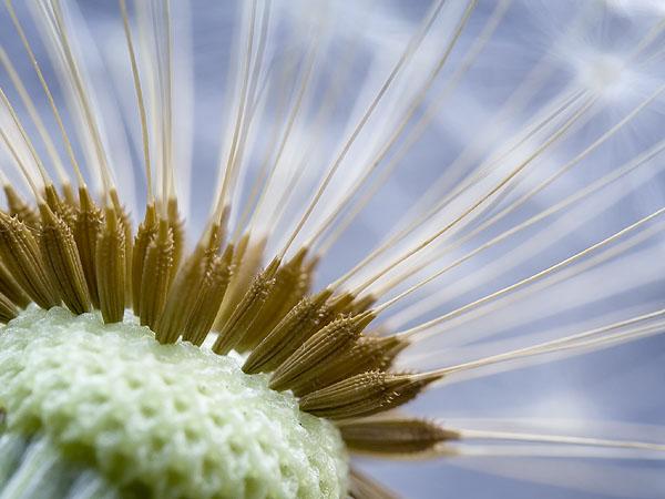 """фото """"katiusa"""" метки: природа, макро и крупный план,"""