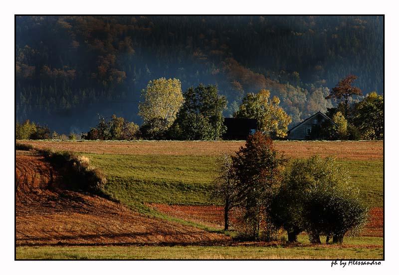 "photo ""colori"" tags: landscape, forest"