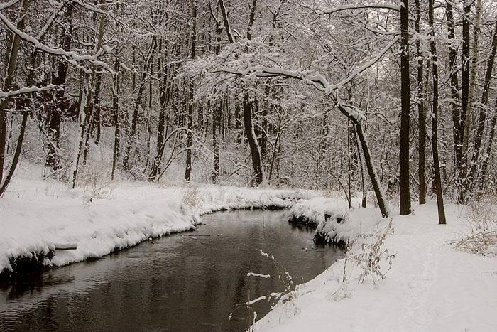 """фото """"Дерево склоняющееся под снегом."""" метки: пейзаж, зима"""