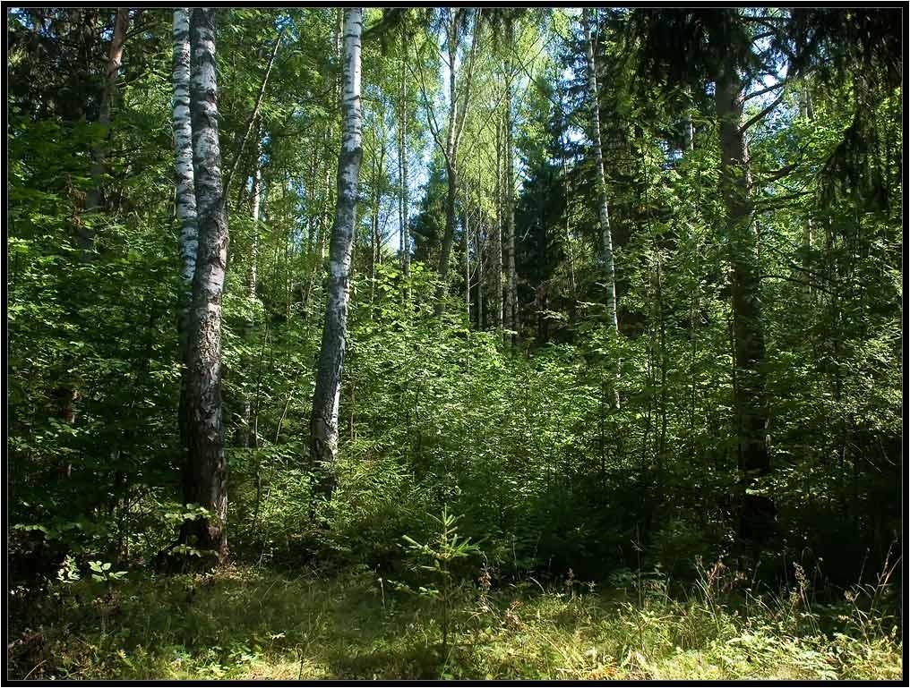 "фото ""Дух леса. Сказошная"" метки: пейзаж, лес"